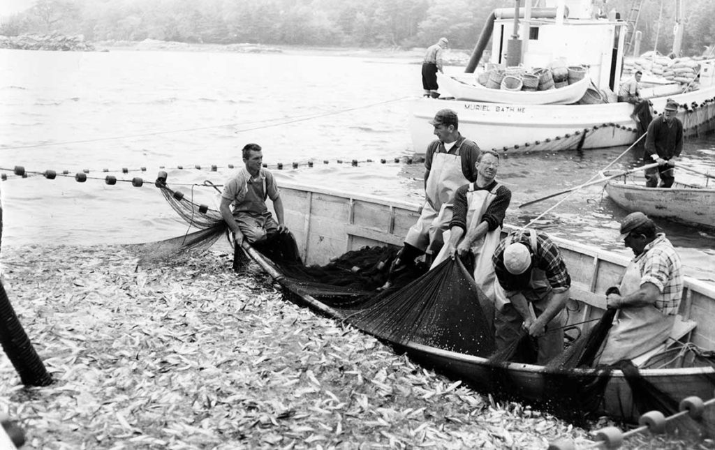 This image from the National Fisherman photo collection at the Penobscot Marine Museum in Searsport shows men harvesting herring