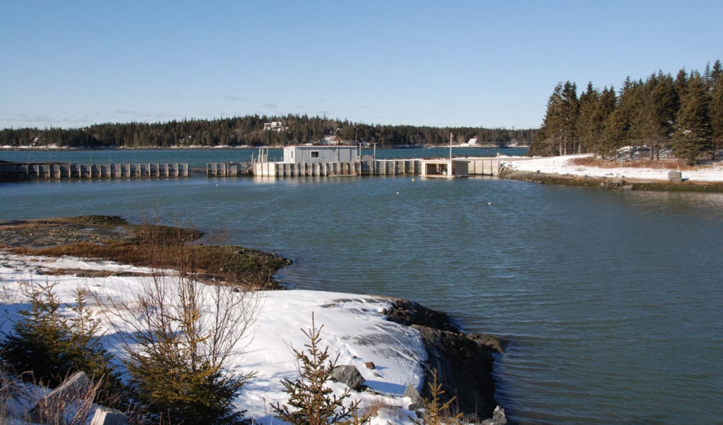 The Marsh Cove Lobster Pound.