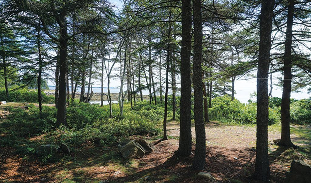 A camp site at Ocean Wood Campground.