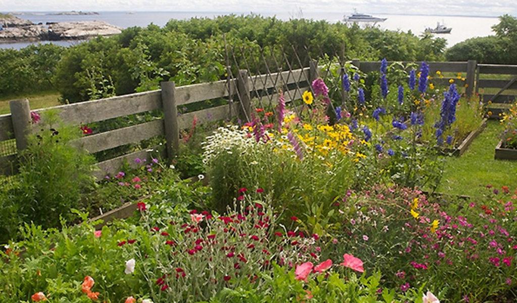An island garden in Maine.