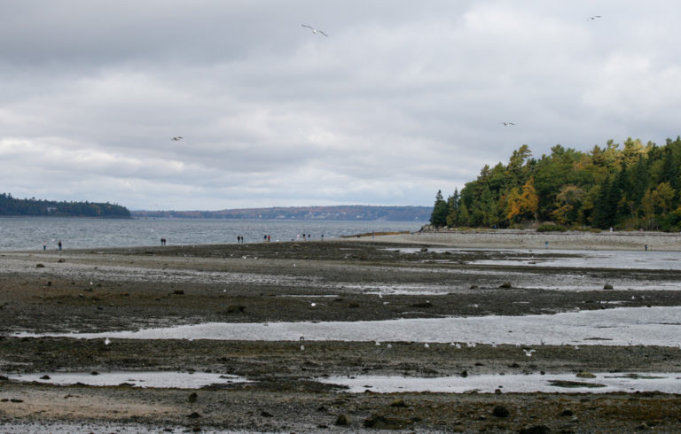Bar Island in Bar Harbor at low tide.