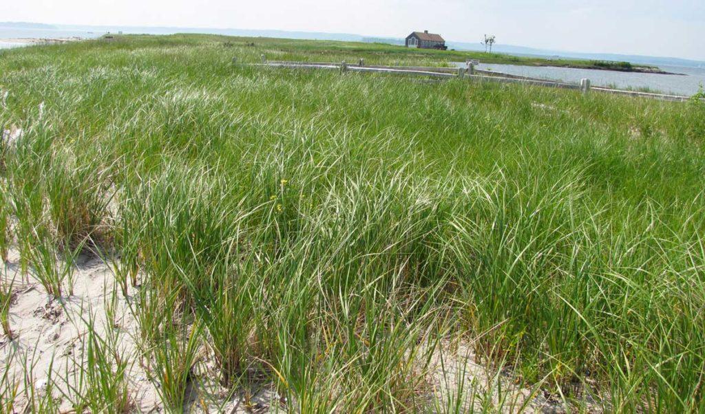 Chebeague Island beach house.