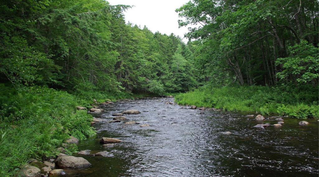 Ducktrap River