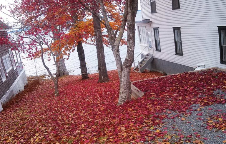 Fallen leaves pile up between two cottages in Bayside
