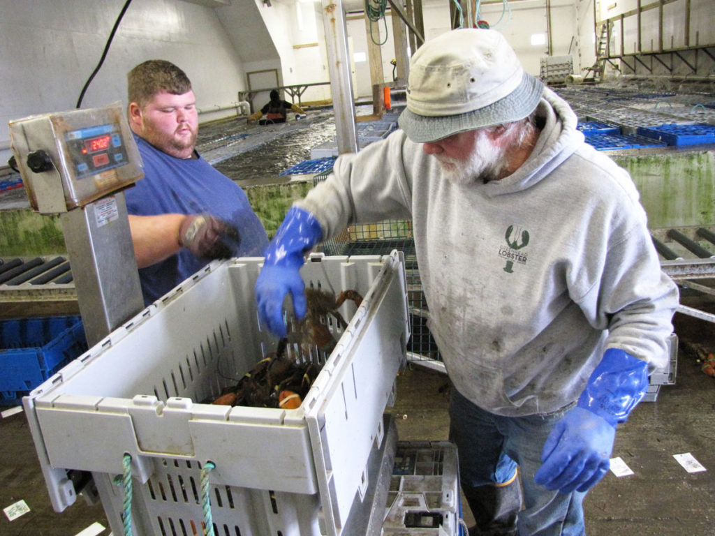 Workers at Green Head Lobster