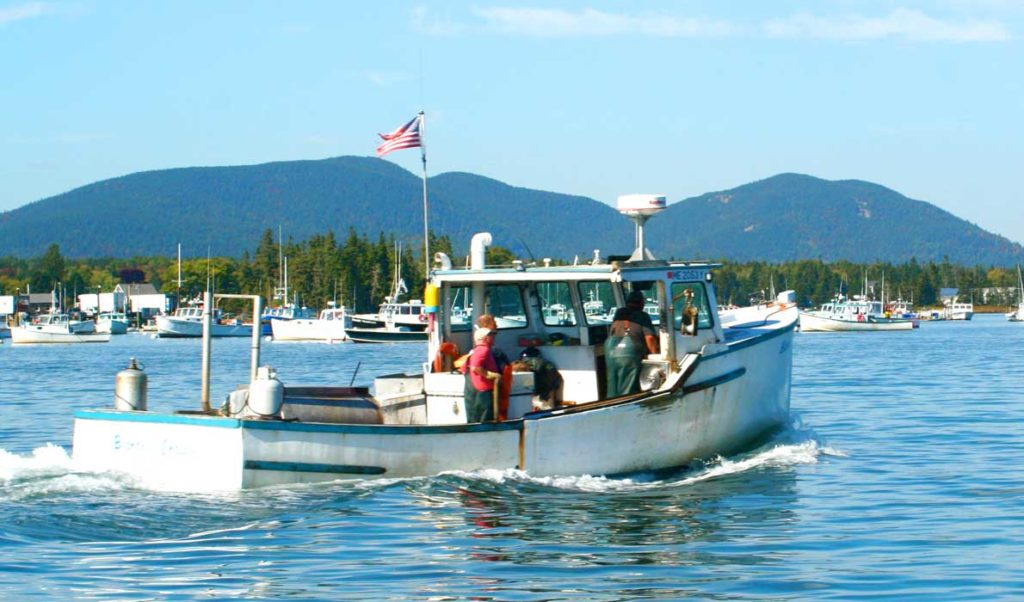 Fishermen head back to Bass Harbor after a day hauling traps.