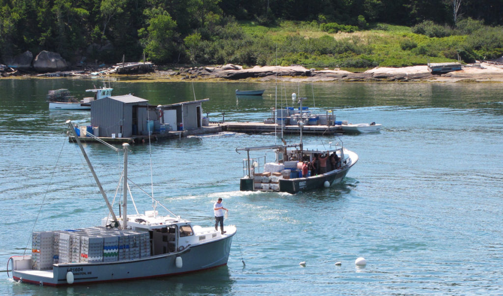 A fishing boat brings its catch to a buying station in Stonington.
