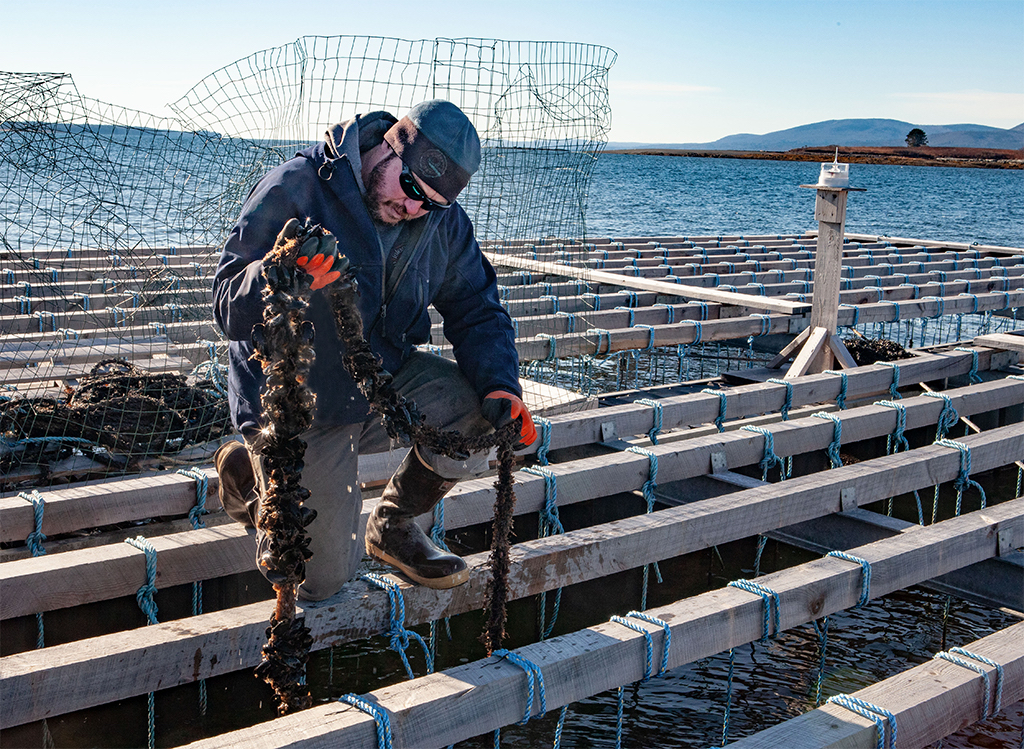 Josh Conover of Marshall Cove Aquaculture on Islesboro inspects a rope of mussels at his farm.