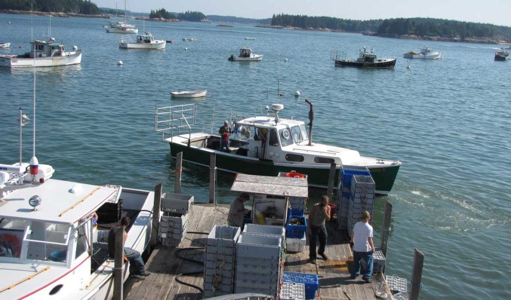 Fishermen unload their catch at one of Stonington's buying stations last September.