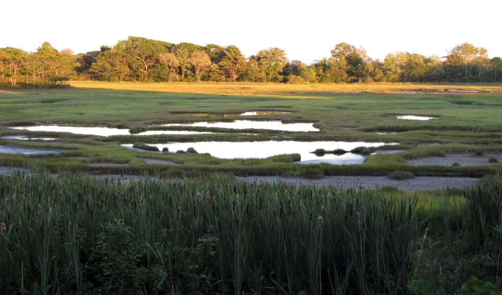 A salt marsh in Southern Maine.